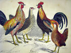 Chicken Rooster Fowl Hen Decorative Poster.Office Room In...