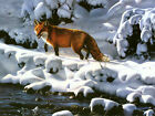 Fox Hunting In The Snow Canvas Pictures Animal Winter Wall Art Prints All Sizes