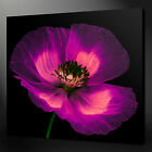 PURPLE POPPY QUALITY CANVAS PRINT PICTURE WALL ART MANY SIZES FREE UK P&P