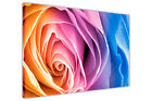 ROSE FLORAL PICTURES ABSTRACT CANVAS WALL ART PRINTS FLOWER DECORATION PHOTOS