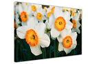 WHITE AND ORANGE FLOWERS FRAMED PRINTS CANVAS WALL ART PICTURES FLORAL POSTERS