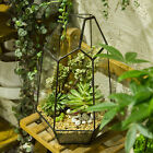 Irregular Glass Geometric Terrarium Box Tabletop Succulent Plant Planter cheap