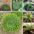 Aloe Mixed Seed Spiral Excellent Houseplants Garden Herbal Succulent Rare Plant