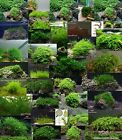 Live aquarium moss water on stainless grid -2-