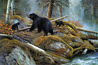 Modern Home Decor print oil painting art wall canvas Bear and its children my283
