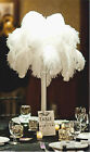 """NEW 10-Pack Top Quality 8-14"""" Inch Natural White OSTRICH FEATHERS"""