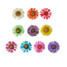 DF013 10 Pcs, 100 Pcs Nail Art 17mm Mini Dried Flower Set-Erigeron karvinskianus