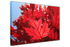 Red Autumn Leaves on Framed Canvas Wall Art Pictures on Floral Prints Home Deco