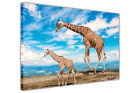 Baby Giraffe Blue Sky on Framed Canvas Wall Art Pictures Animal Prints Wildlife