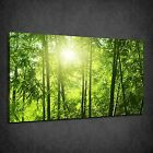GREEN BAMBOO FOREST SUNRAYS MODERN BOX CANVAS PRINT WALL ART PICTURE