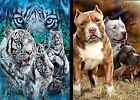 "50""x 60"" 12 White Tigers or Pit bulls Fleece Blanket FREE SHIPPING"