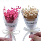 Внешний вид - 1Pcs/lot Mini Gypsophila Natural Dried Flowers Wedding Home Decor DIY Craft Gift