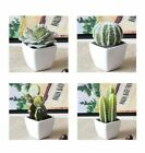 Mini Artificial Potted Succulent Fake Cactus Lotus Plant Bonsai Home Table Decor