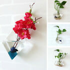 Us Clear Glass Vase Hydroponic Hanging Plants Flower  Home Decor Nursery