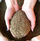 Whole Aniseed - Highest Quality A+++ Anise Seeds, Dried Whole Spices  FREE P&P