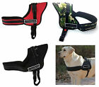 Harness for Dog Sport Dog with Handle Type Julius-K9