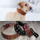 Real Leather Studded Dog Collar Brown Black Small Large Adjustable Rottweiler