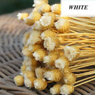 hot50Pcs Natural Dried Flower Bouquet Bridal Wedding Decor Home Bouquet Supplies