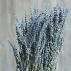 US Dried Natural LAVENDER French Provence Bunch Fragrant Tied 100 Stems Decor