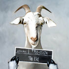 Billy the Kid Goat Funny Oil Painting Paper - or - Canvas Print Poster Wall Art