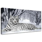 Canvas Print Wall Art Picture For Home Decor White Tiger In Snow Forest any size