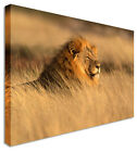 LARGE Wall Art Canvas Lion Waiting Pictures For Home Interiors