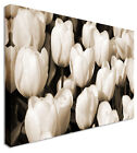 Large White Tulips Bed Garden Floral Flower Canvas Wall Art Print