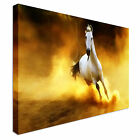 Xlarge horse canvas picture Canvas Wall Art Print Large + Any Size