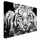Canvas art print black and white tiger Wall Art Print Large + Any Size