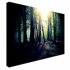 Mysterious Forest Clearing Canvas Art Cheap Wall Print Any Size