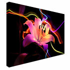 Lily Flower in neon colours Canvas Art Cheap Wall Print Home Interior