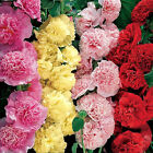 Various Hot Exotic Hydrangea Orchid Ideal Garden Potted Seeds Rare Flower Plant