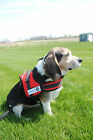 New Soft Adjustable Strong Harness for Medium and Large Dog New