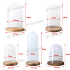 Decorative Glass Dome with Wooden Base  - Cloche Bell Jar Display DIY 7 Sizes