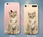 Cat Tabby Kitty Stare Cute Case for iPhone 7 7 Plus 6s 6 SE 5s 5 5c iPod 6th 5th