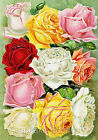 Ten Roses Seed Pack Repro Cotton Quilt Block Multi Szs FrEE ShiP WoRld WiDE