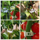 Plant Vine Tomato Stem Clips Supports Connect Trellis Twine Cages Flowers CJT