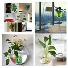 Acrylic Wall Mount Hanging Fish Bowl Aquarium Tank Beta Goldfish Hanger Plant