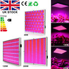 45W 120W 200W LED Hydroponic  Grow Light Panel Indoor Garden Plant Blue Red Lamp