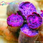 30 Pcs/lot Annual Fruit And Vegetable Seeds Purple Sweet Potato Seeds Diy Home G
