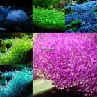 Fish Tank Decoration Mini Leaf Aquarium Aquatic Grass Seeds DL0