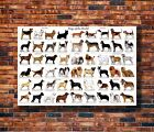Art Cute Dog Breeds -20x30 24x36in Poster - Hot Gift C659