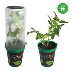 Clone Shipper Classic Container W/ Led Light For Shipping Young Plants Cuttings