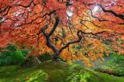 Aaron Reed's HEAVENS GATE Fine Art Limited Edition Acrylic + Peter Lik Book