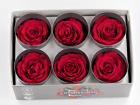 Ecuadorian Preserved Rose Heads - 6 per box - Size Large 6cm