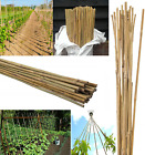 7ft Strong Bamboo Canes Plant Vegetables Support Garden Cane Stake 12-14mm Thick
