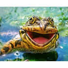 Full Drill Diamond Painting Kit Like Cross Stitch Frog in the Pool DIY ZY147D $21.1 USD on eBay