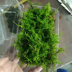 Natural Moss Live Aquatic Green Plants Grass Aquarium Fish Tank Landscape Decor