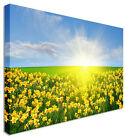 Daffodil Field Yellow - Floral Flower Canvas Wall Art Picture