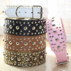 "2"" Wide Colorful Leather Mushroom Studded Dog Collar Large Dog Pitbull Terrier"